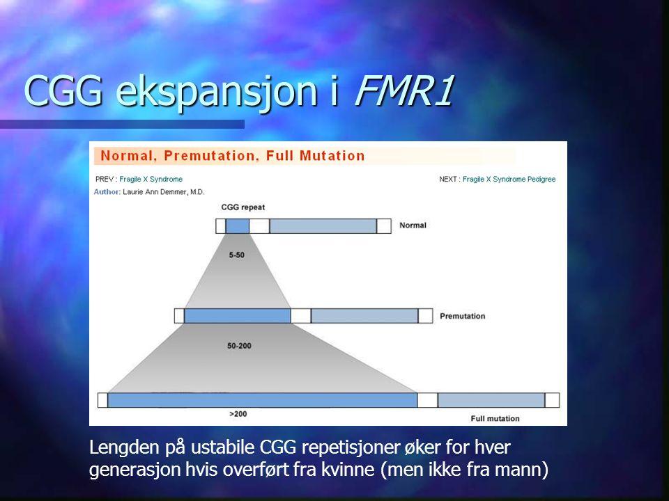 CGG ekspansjon i FMR1 Lengden på ustabile CGG repetisjoner øker for hver generasjon hvis overført fra kvinne (men ikke fra mann)