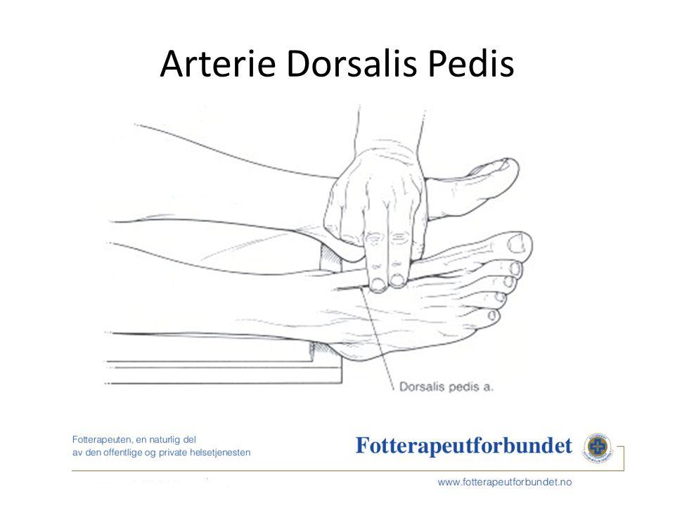 Arterie Dorsalis Pedis