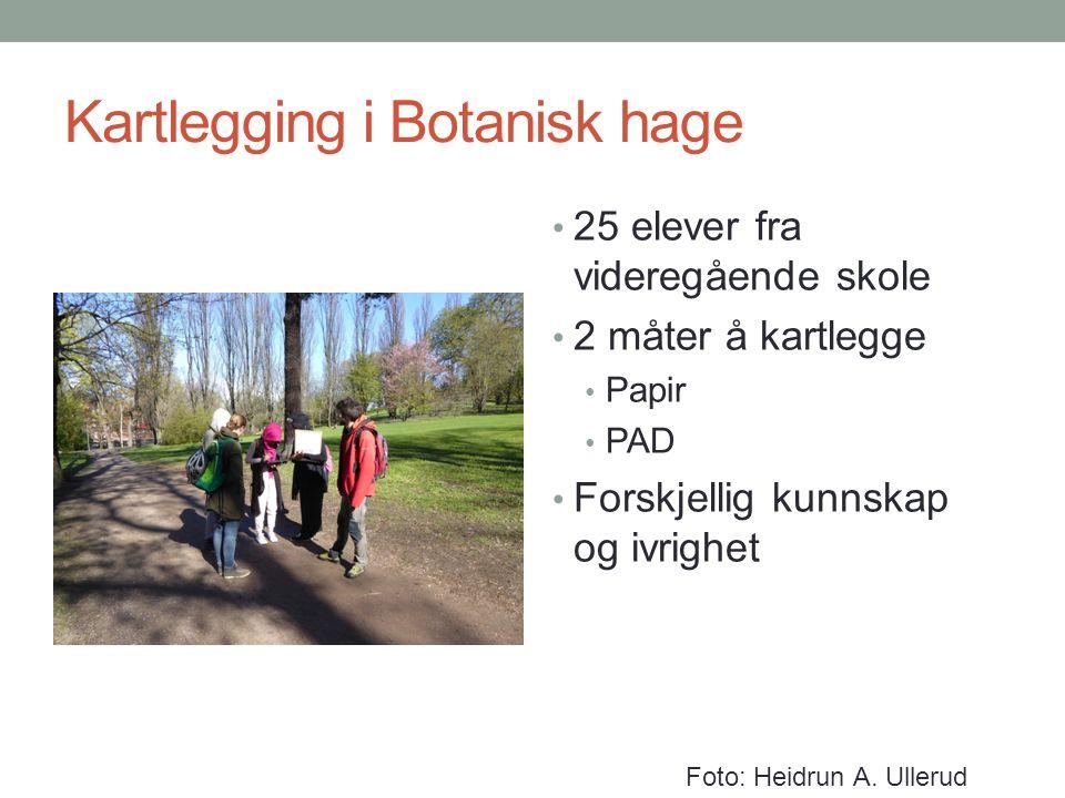 Kartlegging i Botanisk hage 25 elever fra videregående skole 2 måter å kartlegge Papir PAD Forskjellig kunnskap og ivrighet Foto: Heidrun A. Ullerud