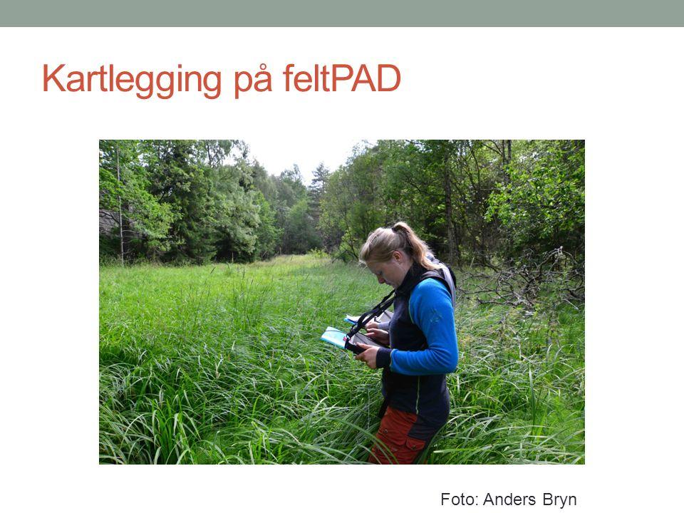 Kartlegging på feltPAD Foto: Anders Bryn