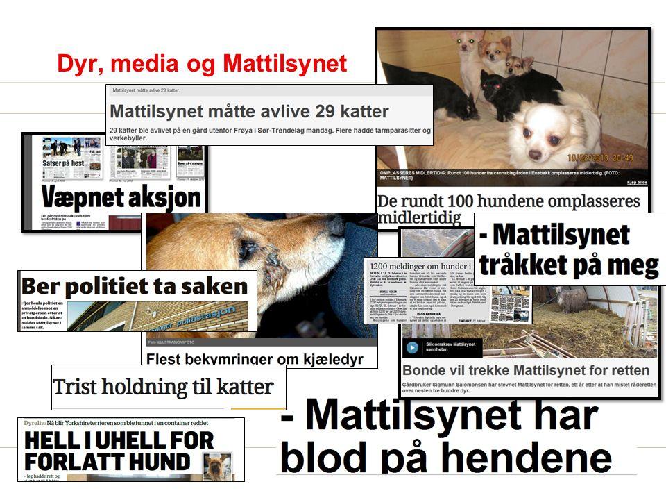 Dyr, media og Mattilsynet
