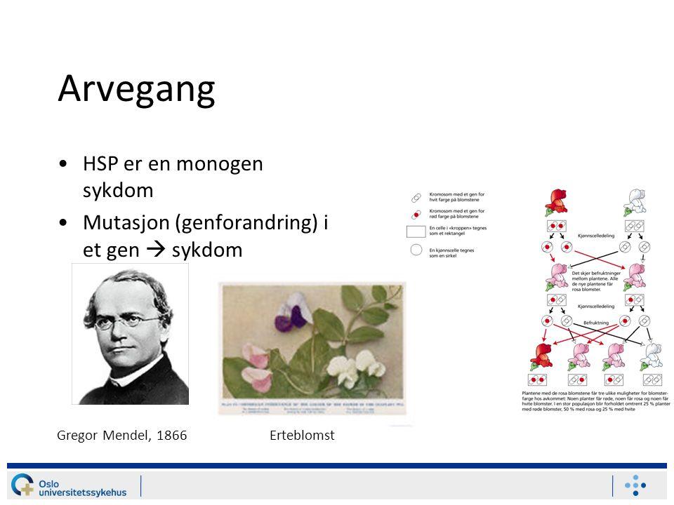 Arvegang HSP er en monogen sykdom Mutasjon (genforandring) i et gen  sykdom Gregor Mendel, 1866Erteblomst