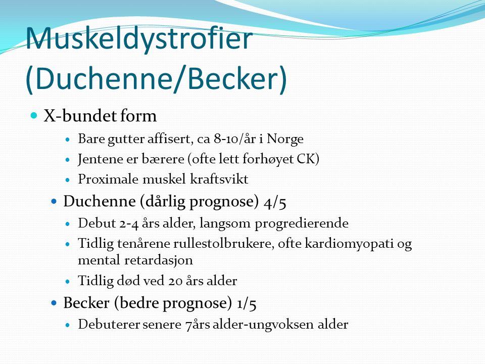 Muskeldystrofier (Duchenne/Becker) X-bundet form Bare gutter affisert, ca 8-10/år i Norge Jentene er bærere (ofte lett forhøyet CK) Proximale muskel kraftsvikt Duchenne (dårlig prognose) 4/5 Debut 2-4 års alder, langsom progredierende Tidlig tenårene rullestolbrukere, ofte kardiomyopati og mental retardasjon Tidlig død ved 20 års alder Becker (bedre prognose) 1/5 Debuterer senere 7års alder-ungvoksen alder
