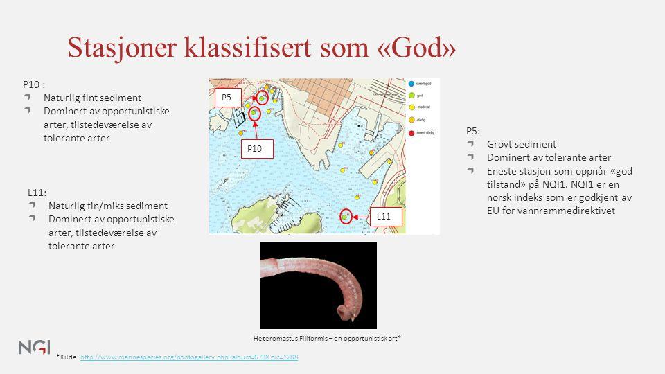 Stasjoner klassifisert som «God» *Kilde: http://www.marinespecies.org/photogallery.php album=673&pic=1288http://www.marinespecies.org/photogallery.php album=673&pic=1288 P5: Grovt sediment Dominert av tolerante arter Eneste stasjon som oppnår «god tilstand» på NQI1.