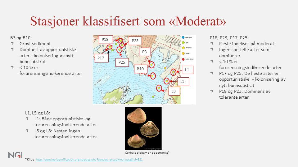 Stasjoner klassifisert som «Moderat» *Kilde: http://species-identification.org/species.php species_group=mollusca&id=621http://species-identification.org/species.php species_group=mollusca&id=621 P18, P23, P17, P25: Fleste indekser på moderat Ingen spesielle arter som dominerer < 10 % er forurensningsindikerende arter P17 og P25: De fleste arter er opportunistiske – kolonisering av nytt bunnsubstrat P18 og P23: Dominans av tolerante arter B3 og B10: Grovt sediment Dominert av opportunistiske arter – kolonisering av nytt bunnsubstrat < 10 % er forurensningsindikerende arter L1, L5 og L8: L1: Både opportunistiske og forurensningsindikerende arter L5 og L8: Nesten ingen forurensningsindikerende arter Corbula gibba – en opportunist* B3 B10 L1 L5 L8 P18 P23 P25 P17
