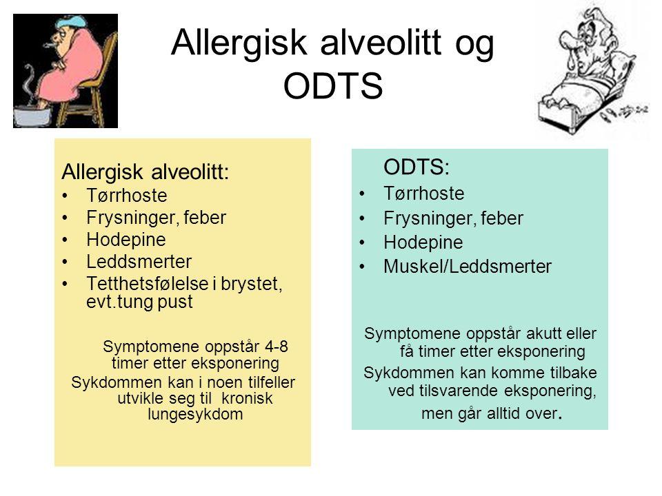 Allergisk alveolitt og ODTS ODTS: Tørrhoste Frysninger, feber Hodepine Muskel/Leddsmerter Symptomene oppstår akutt eller få timer etter eksponering Sy