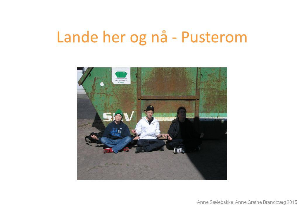 Lande her og nå - Pusterom Anne Sælebakke, Anne Grethe Brandtzæg 2015