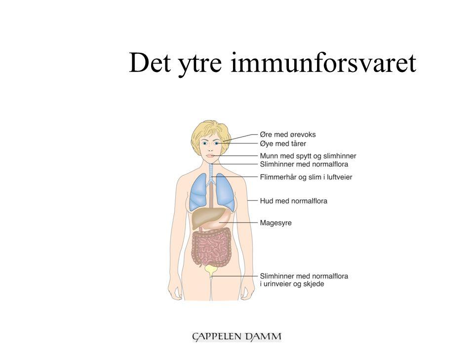 Det ytre immunforsvaret