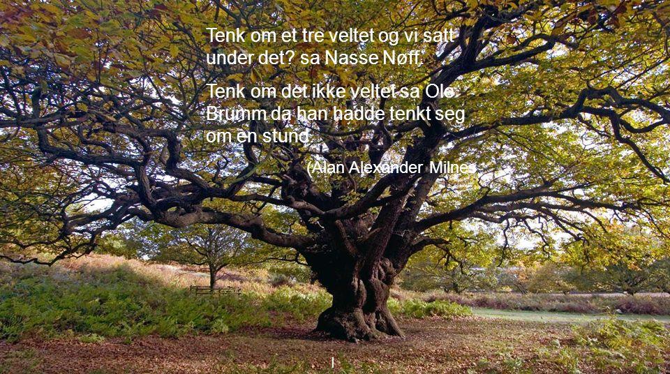 I Tenk om et tre veltet og vi satt under det. sa Nasse Nøff.