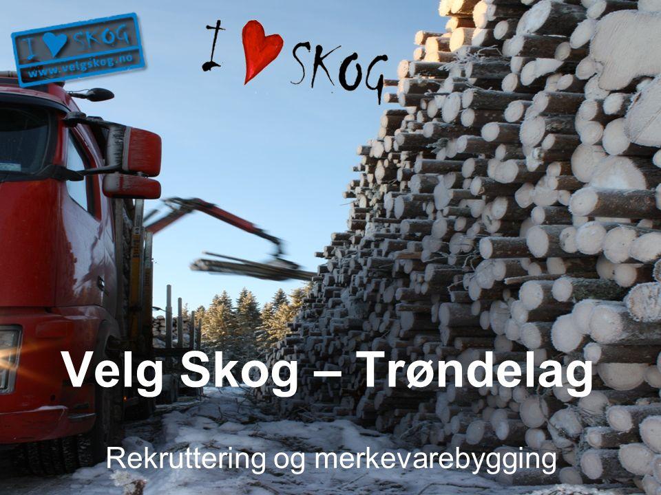 Velg Skog – Trøndelag Rekruttering og merkevarebygging