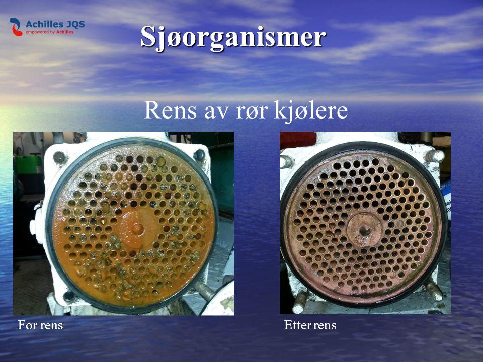 Sjøorganismer Før rensEtter rens Rens av rør kjølere