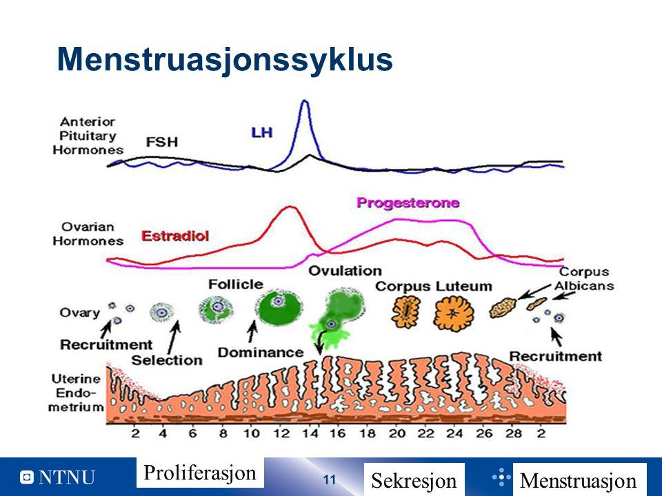 11 Menstruasjonssyklus Proliferasjon SekresjonMenstruasjon