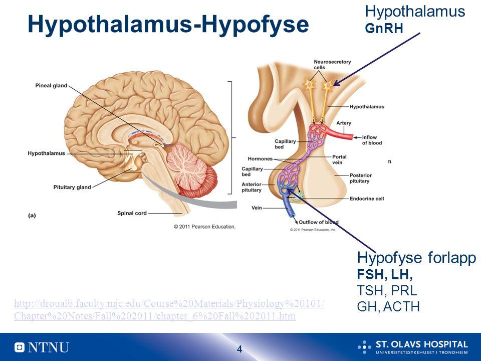 15 Lutealfase Hypofyse: lite FSH og LH Ovarium Corpus luteum Progesteron Østradiol Uterus (endometrie): sekresjon