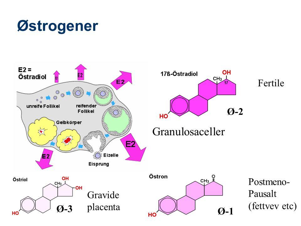 Østrogener Ø-2 Ø-1 Ø-3 Fertile Postmeno- Pausalt (fettvev etc) Gravide placenta Granulosaceller