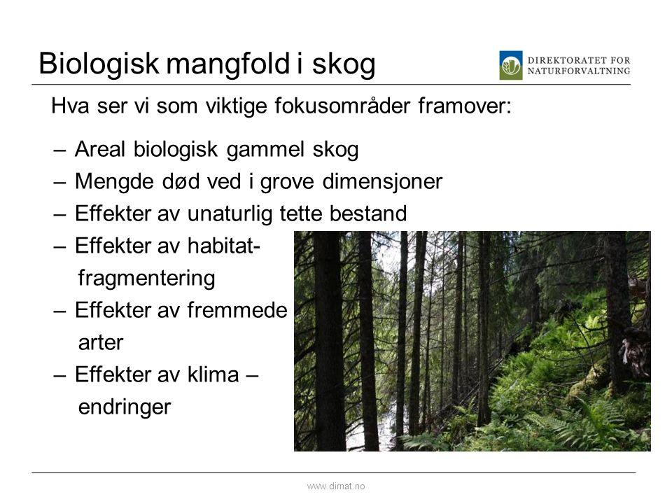 Biologisk mangfold i skog Hva ser vi som viktige fokusområder framover: –Areal biologisk gammel skog –Mengde død ved i grove dimensjoner –Effekter av unaturlig tette bestand –Effekter av habitat- fragmentering –Effekter av fremmede arter –Effekter av klima – endringer www.dirnat.no