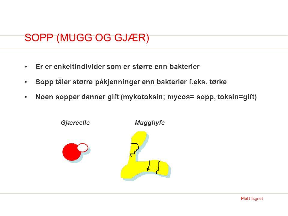 SOPP (MUGG OG GJÆR) Er er enkeltindivider som er større enn bakterier Sopp tåler større påkjenninger enn bakterier f.eks.