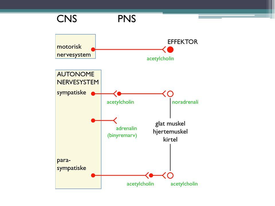 Normal blærefylning – og tømming Forutsetter normalt fungerende nervesystem - CNS + PNS Normale anatomiske strukturer øvre og nedre urinveier