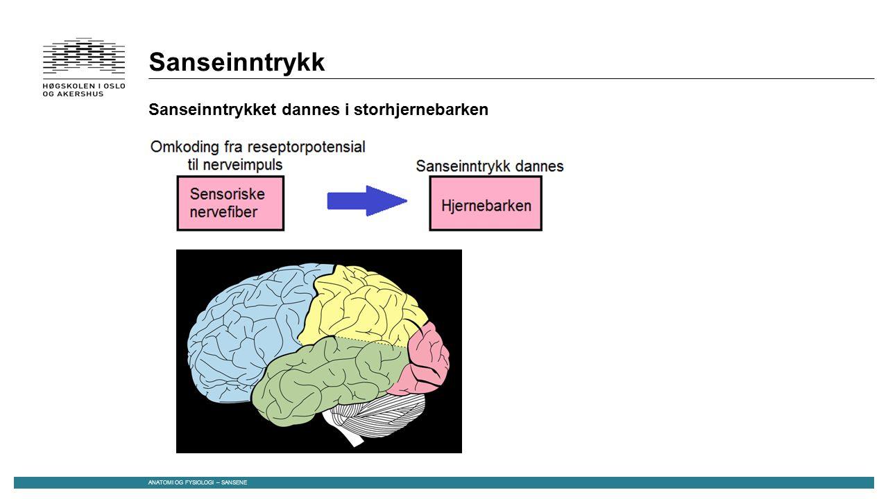 Stimulering av sansereseptor - oppsummert Modifisert signal til cellen -> Reseptorpotensial -> Reseptorpotensial omkodes til nerveimpulser Direkte eller indirekte i sensoriske nervefibrer -> Nerveimpulser til hjernebarken -> Sanseinntrykket dannes ANATOMI OG FYSIOLOGI – SANSENE