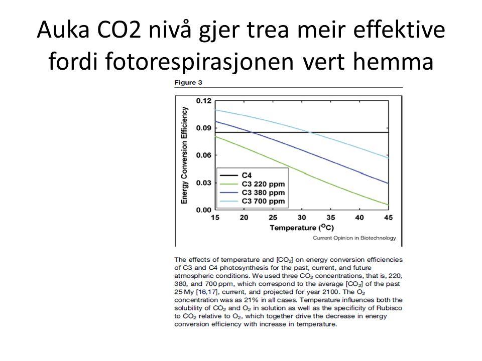 Auka CO2 nivå gjer trea meir effektive fordi fotorespirasjonen vert hemma