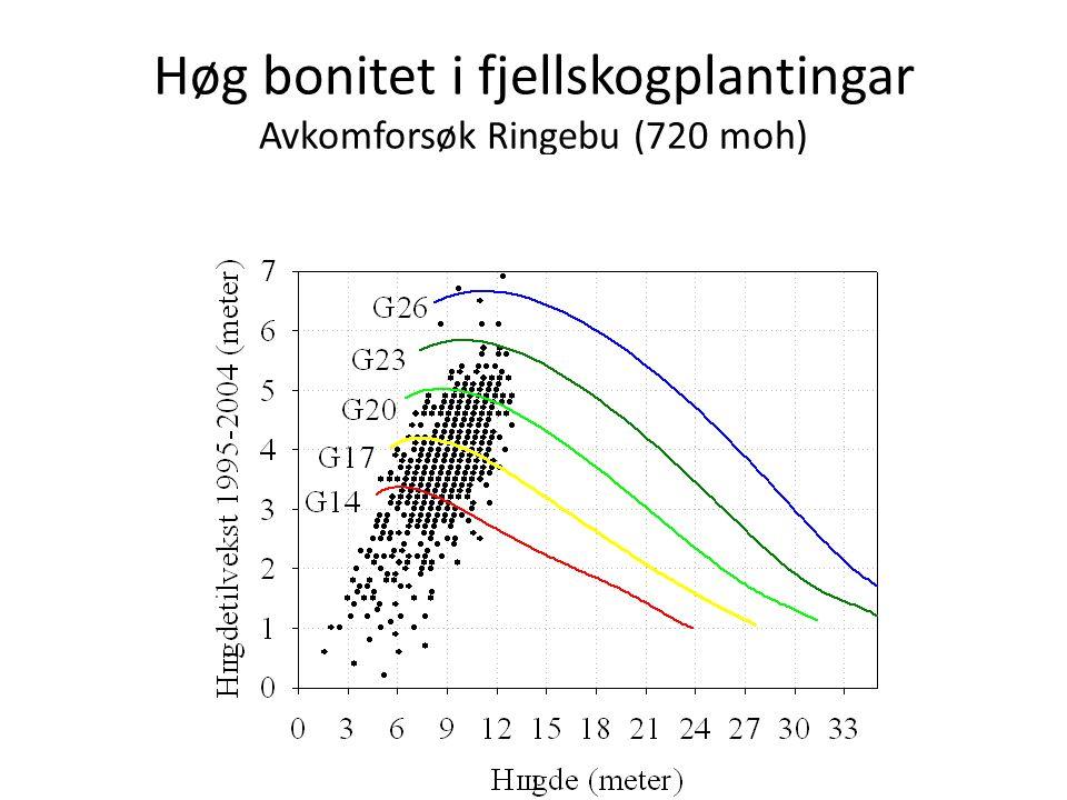 Høg bonitet i fjellskogplantingar Avkomforsøk Ringebu (720 moh)