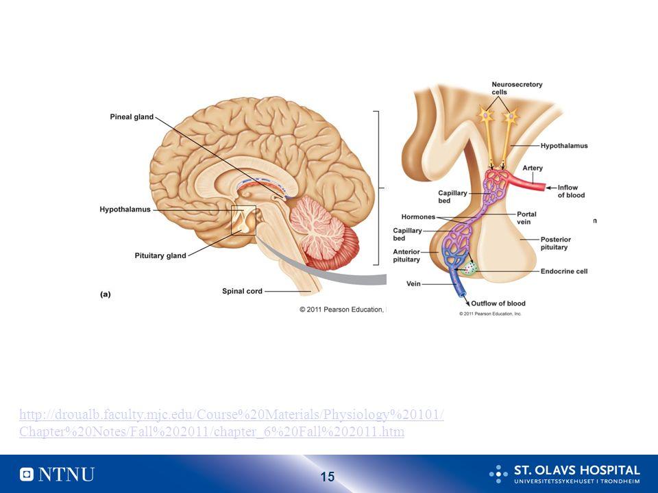 14 Hypotalamus – hypofyse – binyre (HPA) aksen
