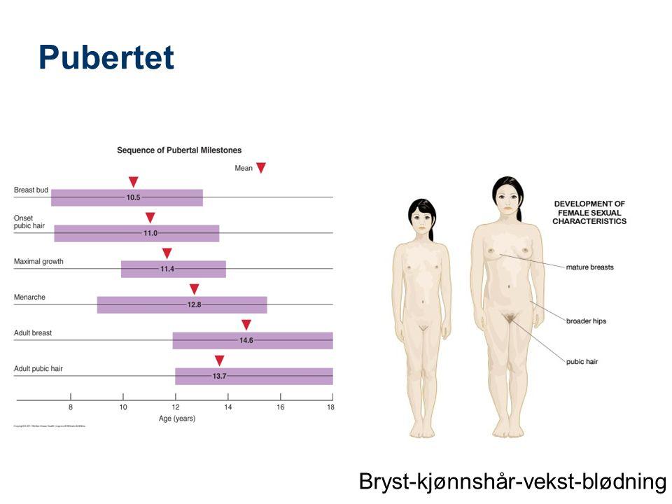 Pubertet Bryst Kjønnshår Lengdevekst Blødning Akne Østrogen Testosteron
