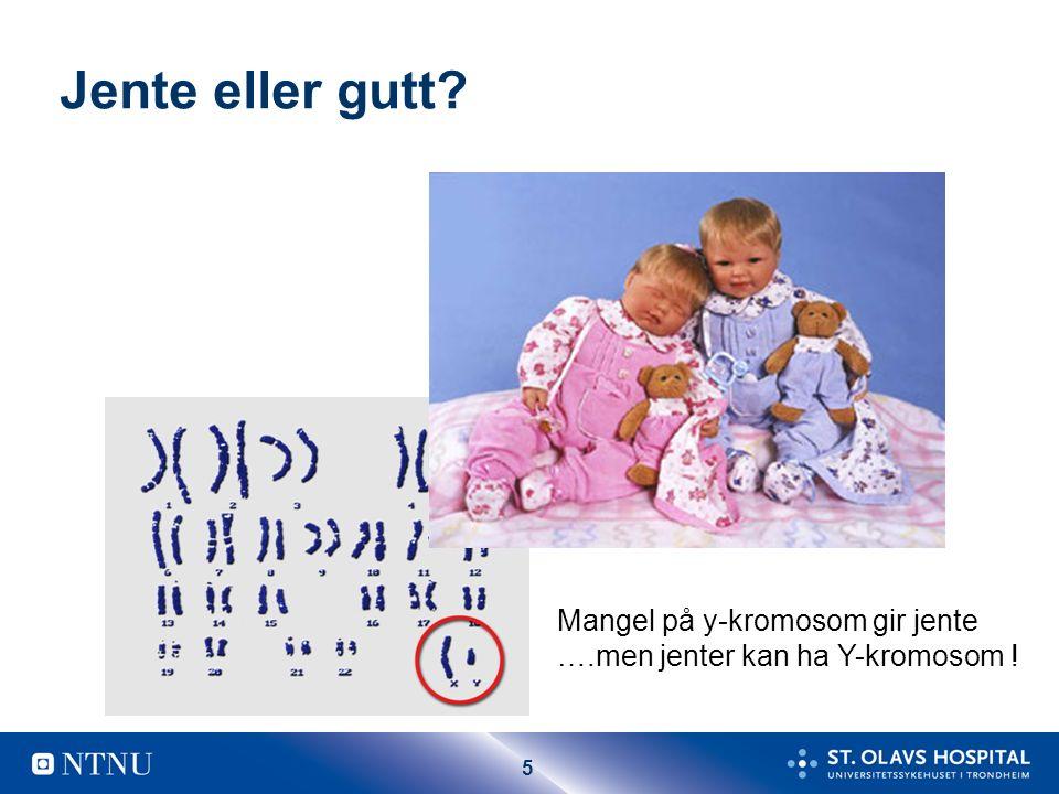 5 Jente eller gutt? Mangel på y-kromosom gir jente ….men jenter kan ha Y-kromosom !
