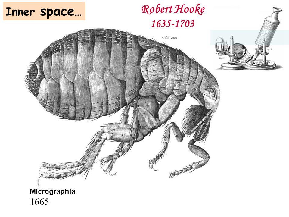 Micrographia 1665 Robert Hooke 1635-1703 Inner space …