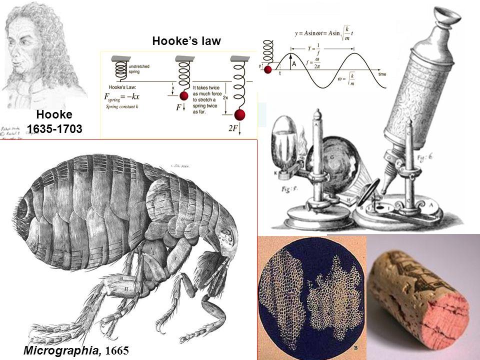Hooke 1635-1703 Micrographia, 1665 Hooke's law