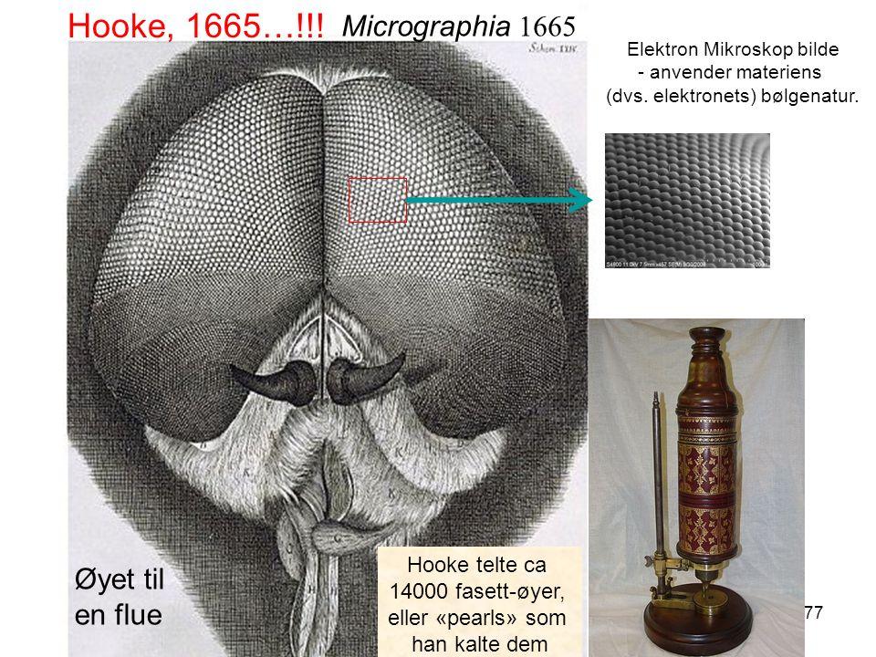 77 Hooke, 1665…!!. Elektron Mikroskop bilde - anvender materiens (dvs.
