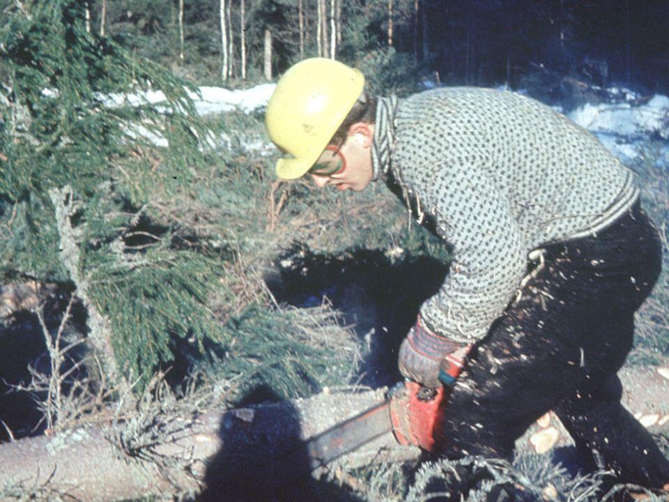 Skogbruket I 70-årene - noen skogbruksmessige utfordringer