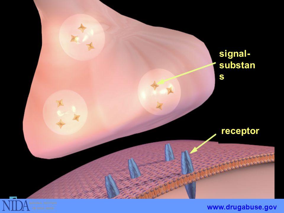 Hvordan stoff virker Sentralnervesystemet Hjernen Signalsubstans Kroppen reagerer med motgift