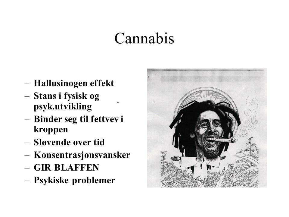 Canabis sativa (indisk hamp) Hva inngår i gruppen: Marihuana Hasjisj Cannabisolje Inntaksmåter: Røyking Spising