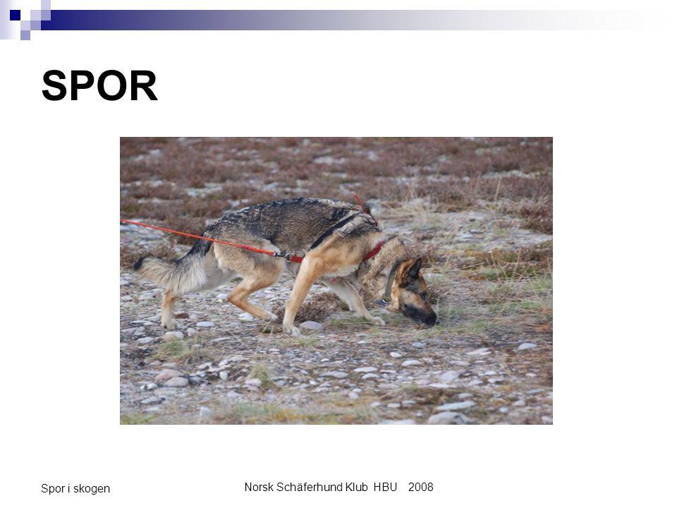 Norsk Schäferhund Klub HBU 2008 Spor i skogen SPOR