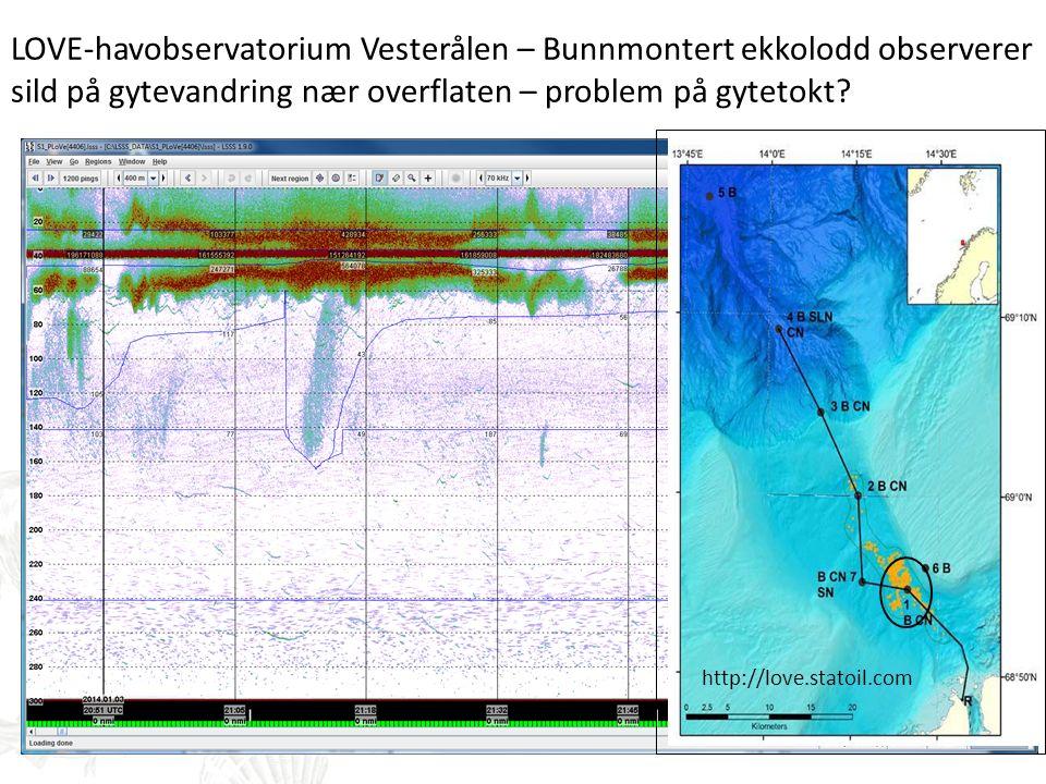 LOVE-havobservatorium Vesterålen – Bunnmontert ekkolodd observerer sild på gytevandring nær overflaten – problem på gytetokt? http://love.statoil.com