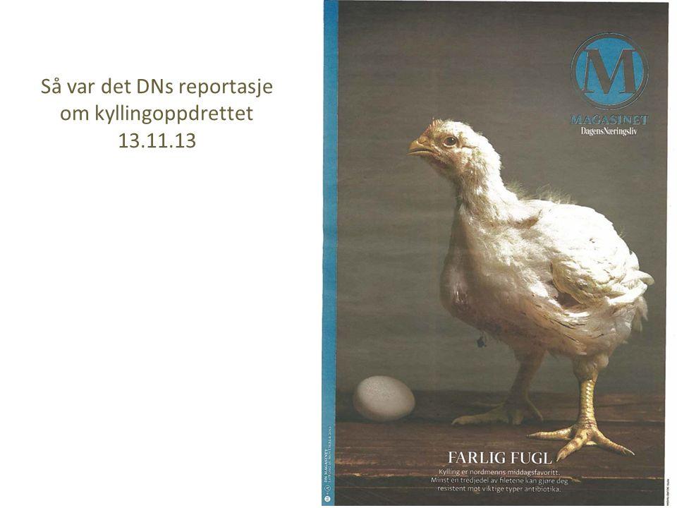 Så var det DNs reportasje om kyllingoppdrettet 13.11.13