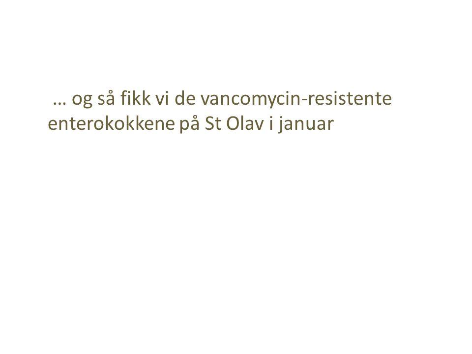 … og så fikk vi de vancomycin-resistente enterokokkene på St Olav i januar