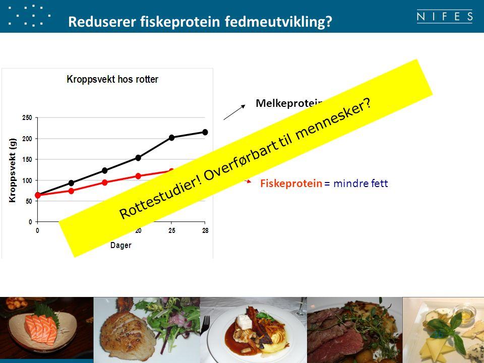 Reduserer fiskeprotein fedmeutvikling? Fiskeprotein = mindre fett Melkeprotein = mer fett 16 Rottestudier! Overførbart til mennesker?