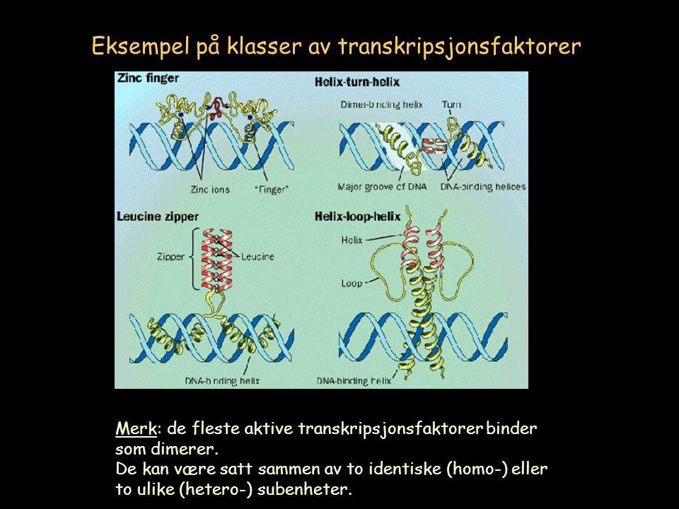 Eksempel på klasser av transkripsjonsfaktorer Merk: de fleste aktive transkripsjonsfaktorer binder som dimerer.