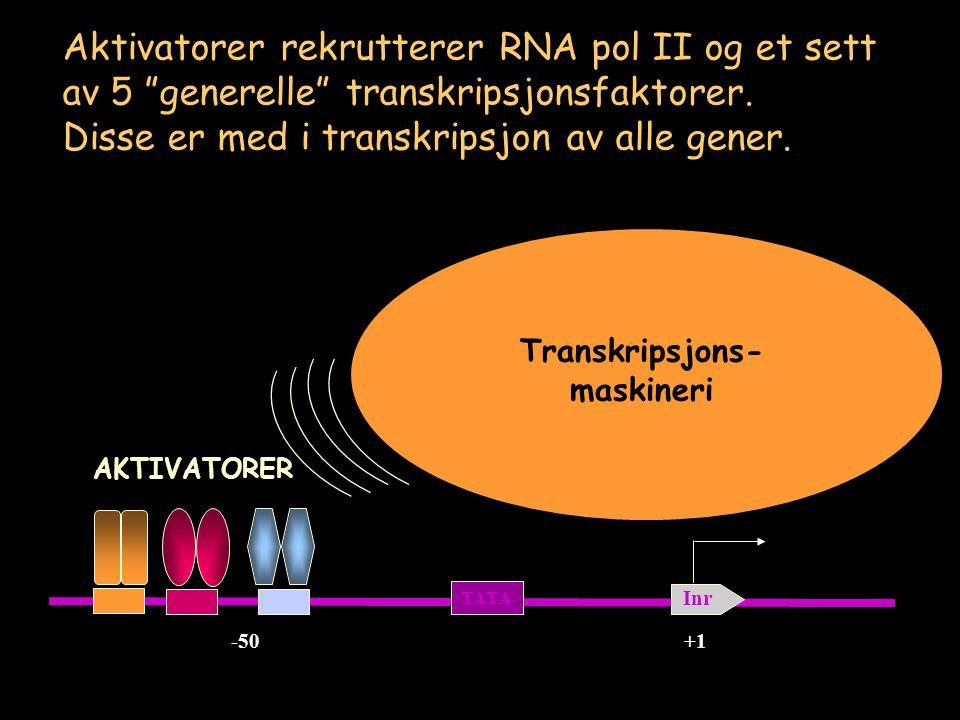 -50+1 TATA Inr RNA pol II IIF IIH IIE IIB IID Aktivatorer rekrutterer RNA pol II og et sett av 5 generelle transkripsjonsfaktorer.