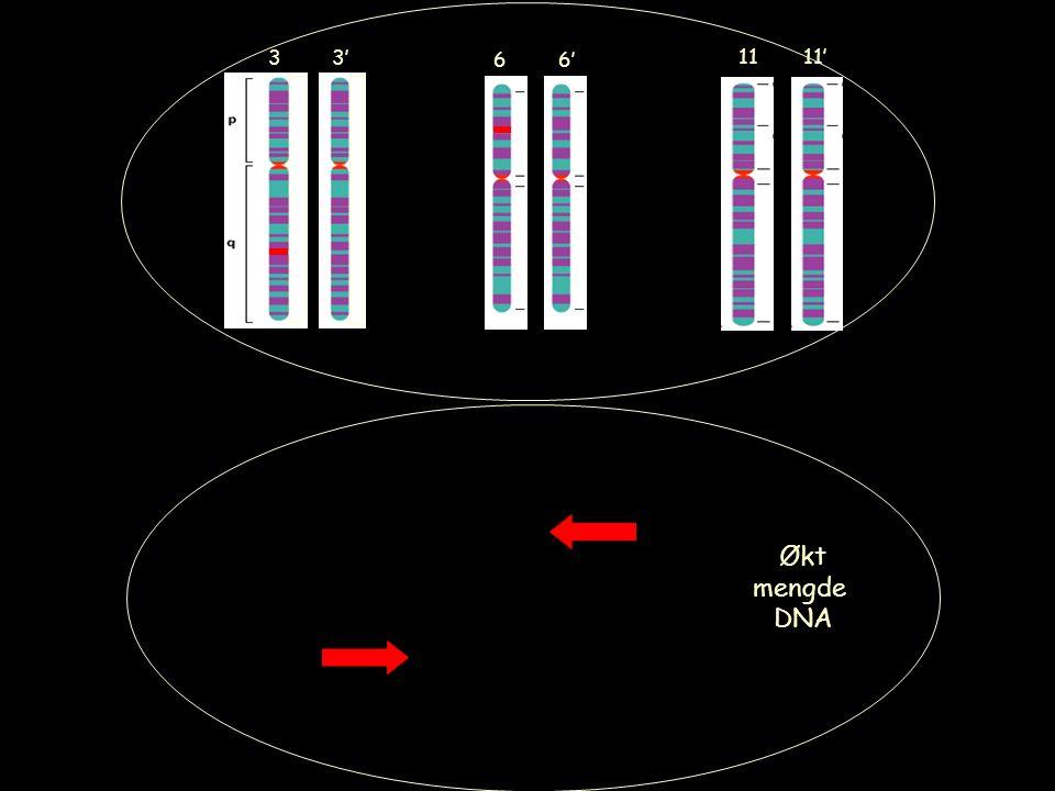 6' 11 11' 3 3' 6 Økt mengde DNA