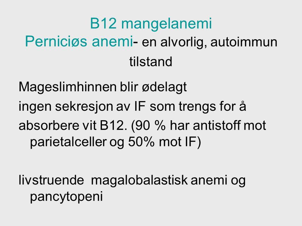 B12 mangelanemi Perniciøs anemi- en alvorlig, autoimmun tilstand Mageslimhinnen blir ødelagt ingen sekresjon av IF som trengs for å absorbere vit B12.