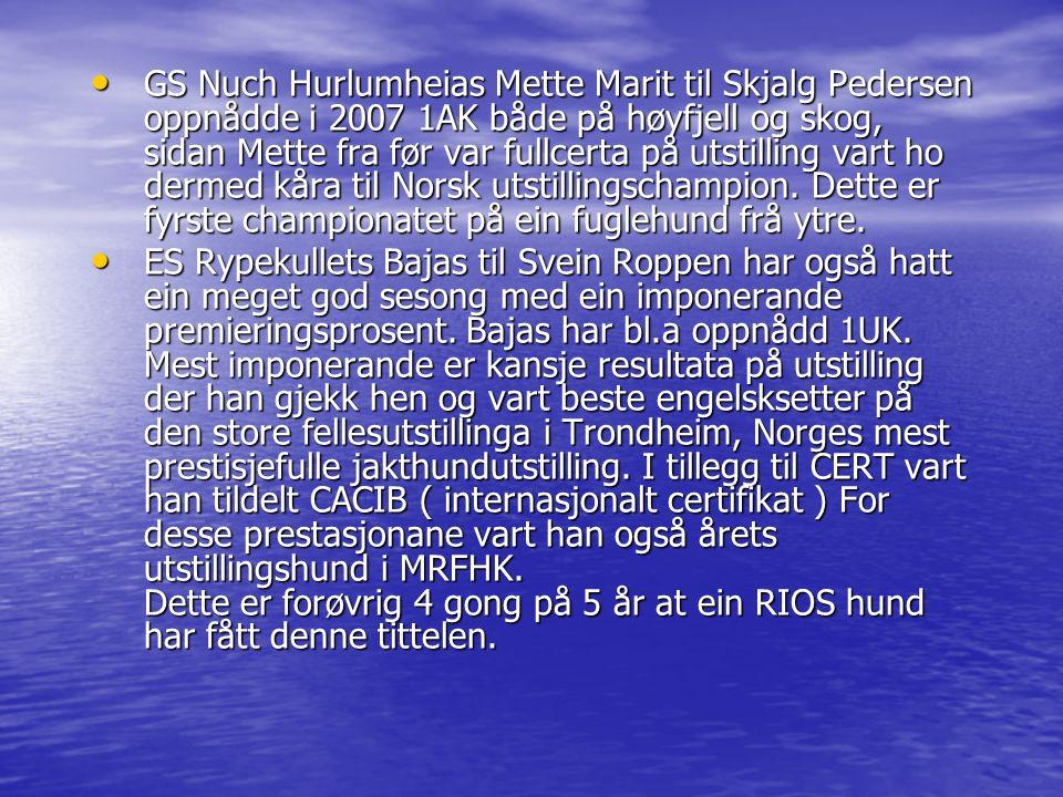 GS Nuch Hurlumheias Mette Marit til Skjalg Pedersen oppnådde i 2007 1AK både på høyfjell og skog, sidan Mette fra før var fullcerta på utstilling vart