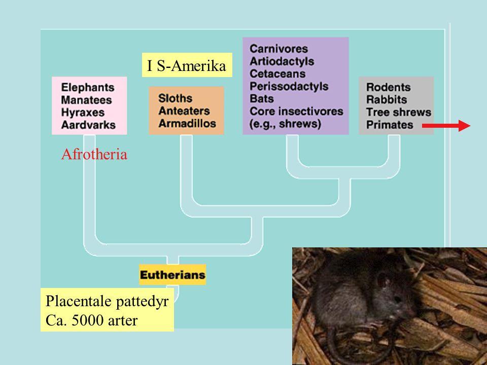 kloakkdyr pungdyr ≈ 200 mill år siden