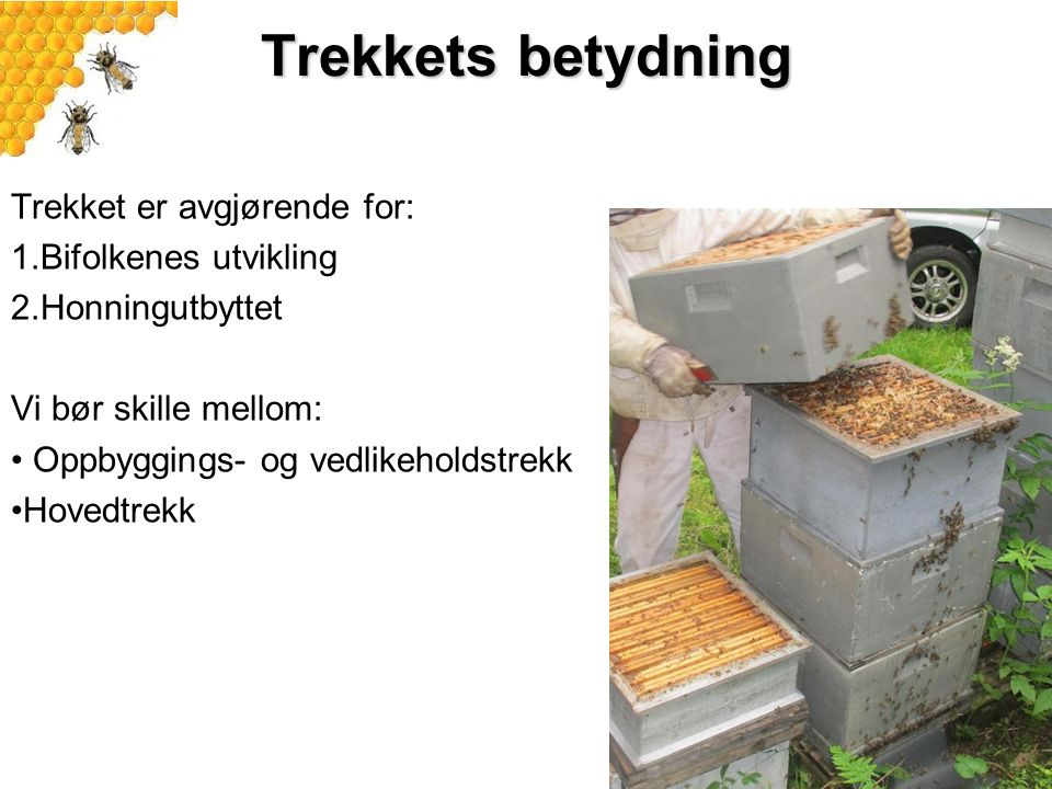 Trekkets betydning Trekket er avgjørende for: 1.Bifolkenes utvikling 2.Honningutbyttet Vi bør skille mellom: Oppbyggings- og vedlikeholdstrekk Hovedtr