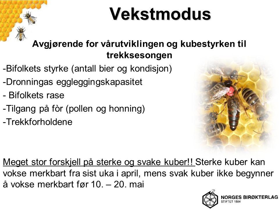 Vekstmodus Avgjørende for vårutviklingen og kubestyrken til trekksesongen -Bifolkets styrke (antall bier og kondisjon) -Dronningas eggleggingskapasitet - Bifolkets rase -Tilgang på fòr (pollen og honning) -Trekkforholdene Meget stor forskjell på sterke og svake kuber!.