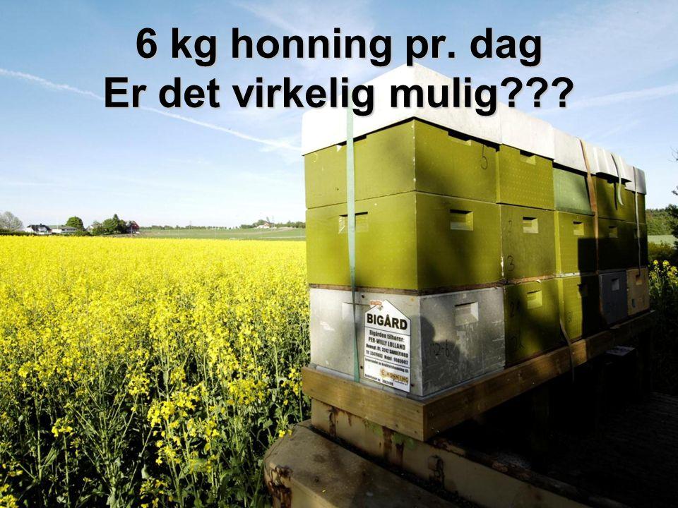 6 kg honning pr. dag Er det virkelig mulig???