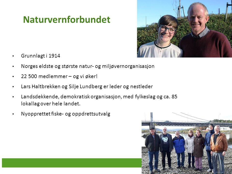 Naturvernforbundet Grunnlagt i 1914 Norges eldste og største natur- og miljøvernorganisasjon 22 500 medlemmer – og vi øker! Lars Haltbrekken og Silje