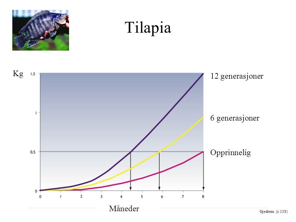 Tilapia Opprinnelig 6 generasjoner 12 generasjoner Måneder Kg Gjedrem (s 138)