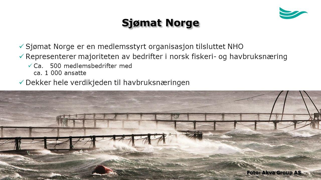Sjømat Norge Sjømat Norge er en medlemsstyrt organisasjon tilsluttet NHO Representerer majoriteten av bedrifter i norsk fiskeri- og havbruksnæring Ca.